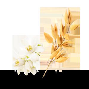 Lait-Avoine-Fleur-Oranger