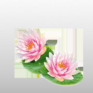 Detox Lotus Bio