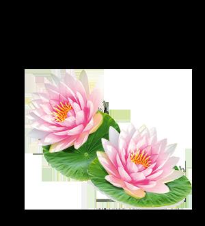 Detox Lotus Bio_400ML-ingredient